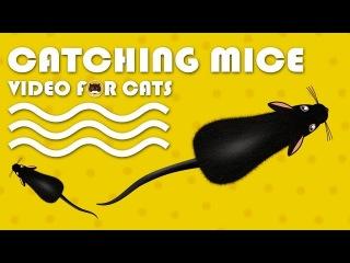 CAT GAMES - Catching Mice! Entertainment Video for Cats to Watch.
