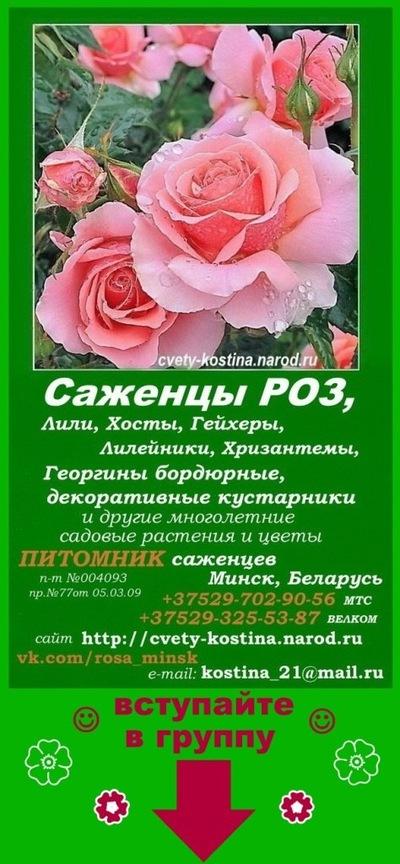 Цветы розы оптом купить минск цена, цветы оптом купить украина