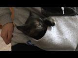 Няшный котенок залипает в кармане