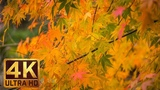 Last Days of Fall - 2 Hours - 4K UHD Relaxation Autumn Video with Nature Sounds - Part 1