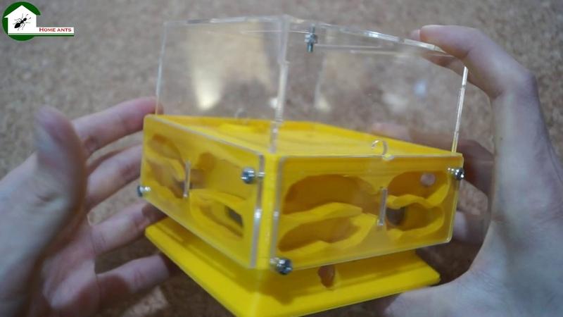 Куб виробництва Home Ants . Формикарий , муравьиная ферма. Обзор формикария