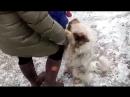 Невероятное видео Бездомный пёс очень просит людей забрать его домой