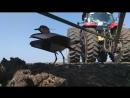 Фермер поднял тракторную сеялку чтобы не навредить птице