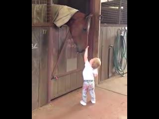 Милое видео про любовь к лошадям