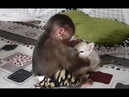 Baby Monkey | Funny Doo And Cat Miu Become Best Friends
