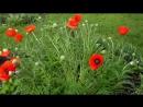 Садовые цветы Обзор дачного участка Цветение цветов на даче Дачный ответ Дача