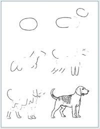 В этом уроке рисования мы будем учиться рисовать следующие породы собак: -Афганская борзая -Басенджи.