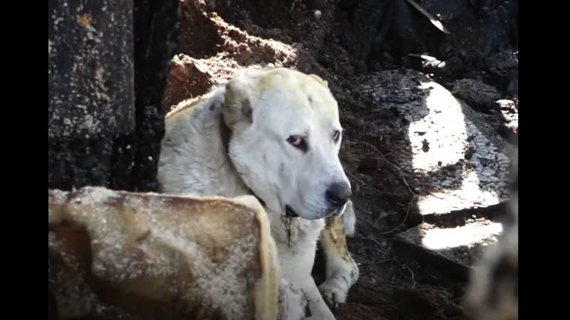 Собака спасла семью от пожара...