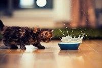 кошки картины