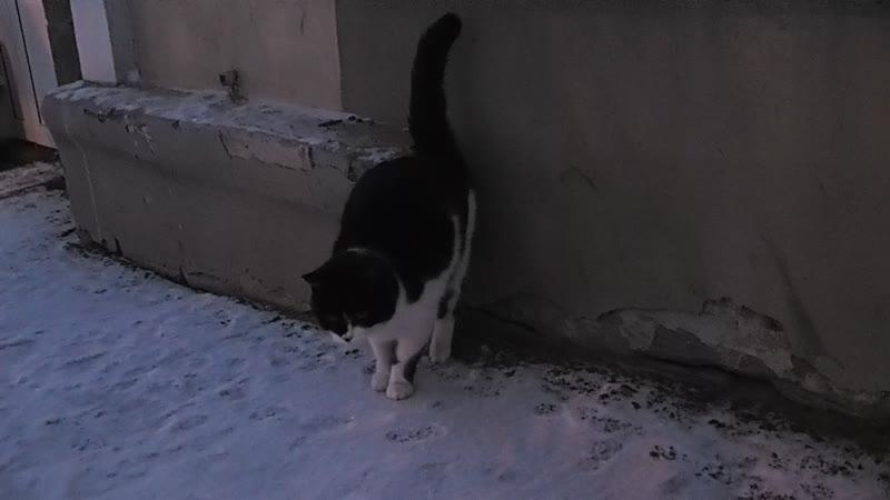 Кошка черно белая у магазина на К PC220067