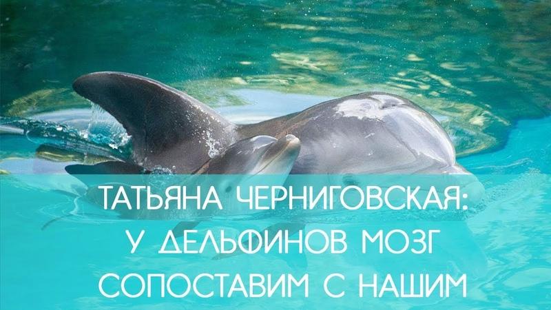 Татьяна Черниговская У дельфинов мозг сопоставим с нашим