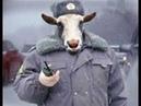 Ахеревшая полиция Одессы.