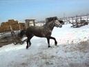 лошадь скачет и пугает