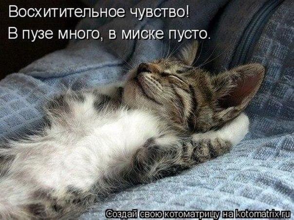 Кошки коты и котята