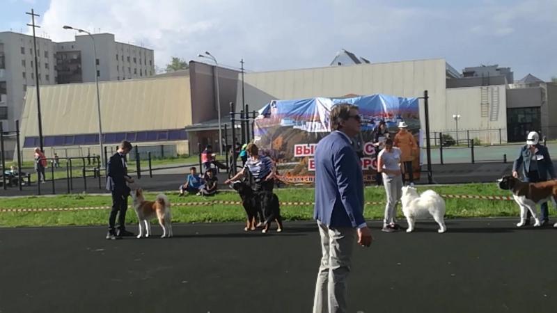 Выставка собак всех пород ранга кчф рфсс, г.Тобольск, 24.06.2018, г.Тобольск. Дебют!