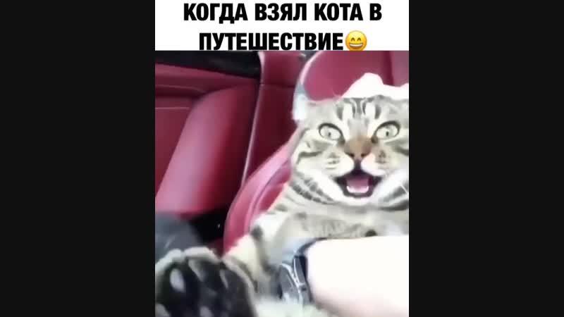 Когда взял кота в путешествие