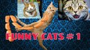 Very funny video about our pets. FUNNY cats 1Смешные кошки))