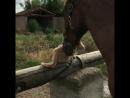 Любовь лошади к кошке