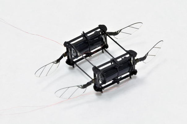 На фото - Робот-пчела RoboBee, которого уже на протяжении шести лет продолжают совершенствовать инженеры из Гарвардского университета