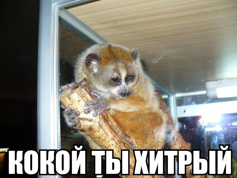 http://cs418931.vk.me/v418931053/3f0d/JXCOD7kIEMg.jpg
