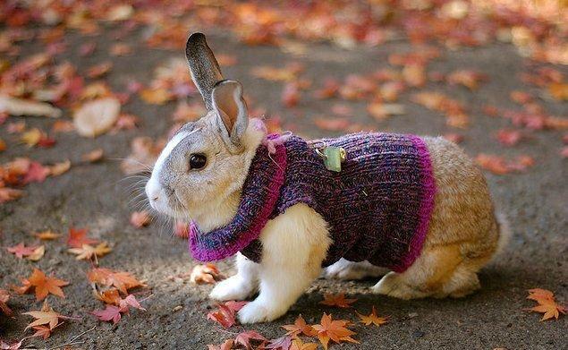 Сонник для кроликов своими руками