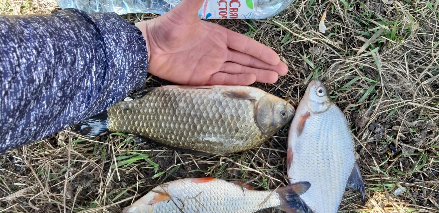 Форумы рыбалке на дону