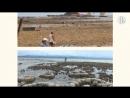 В Тайланде вода отошна на 2 км. На Аляске цунами 524 м. № 664