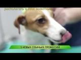 Пять новых собачьих профессий
