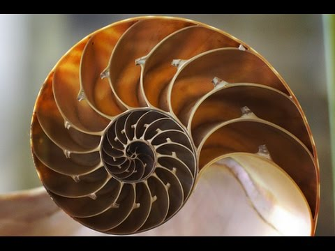 Fibonacci Altın Oran Belgeseli - HD