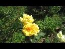 Внекорневая подкормка Помидоры Огурцы Салат Морковка Шпинат Розы