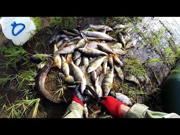 Рыбалка на севере труднодоступное и дикое место Кругом медведи и лоси Часть 1