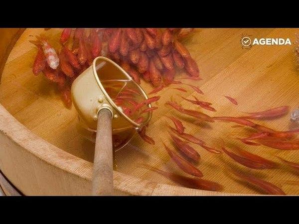 Живопись Риузуке Фукаори: трёхмерные живые рыбки покорили весь мир