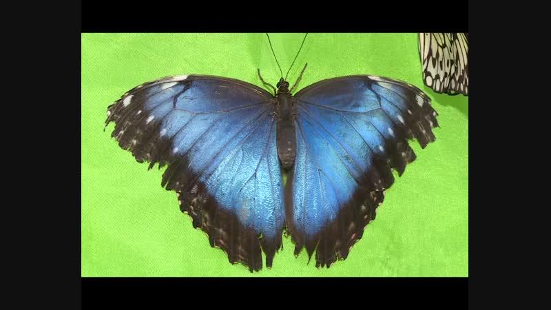 Парк живых бабочек в Пензе 2018 г.
