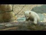 Дочь медведя Кнута – новая звезда Германии