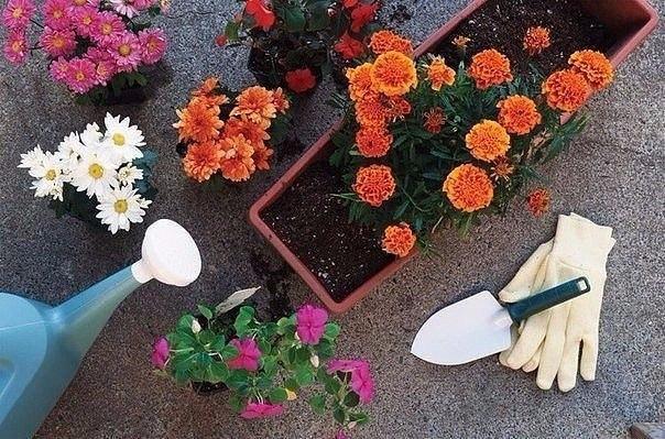 12 эффективных способов удобрить домашние растения.