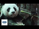 Bamboo Fords Future Solution Towards Eco-Conscious Vehicles  Sustainable Innovations  Ford