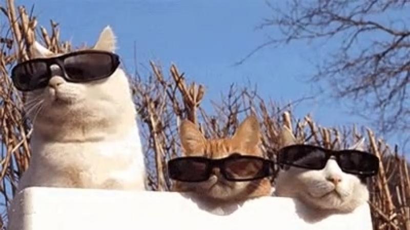 Котики в сз очках