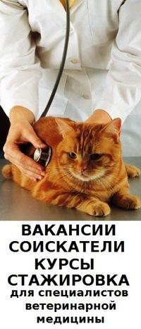 Работа в ветеринарии спб