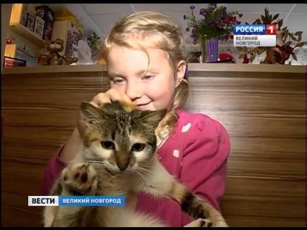 ГТРК СЛАВИЯ Котейня благотворительная акция 05 10 16