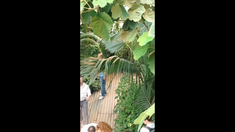 Пальмавая оранжерея