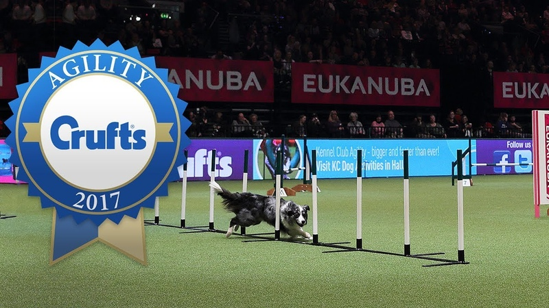 Fastest Runs from the Agility Championship Final at Crufts 2017