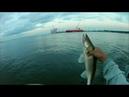 Ловля судака ТРОЛЛИНГОМ порт Бронка Фин залив