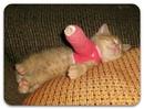 Ребёнку подарили набор доктора, и у кота началась новая жизнь с трудно излечимыми болезнями…