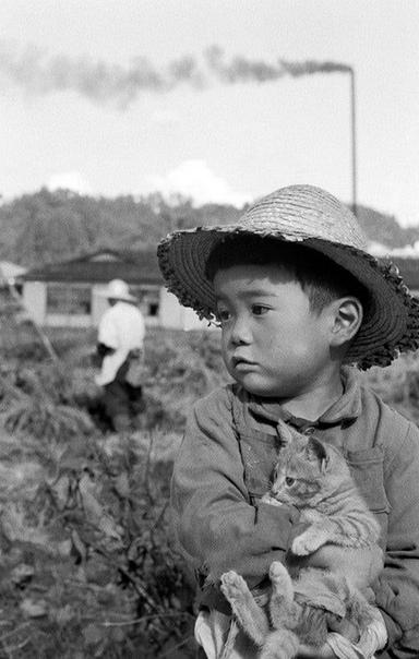Трогательное фото мальчика в соломенной шляпе с котенком. Япония, 1956 год