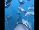 #dolphins #swimming #adventures