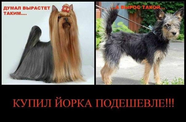 Грумінг (Стрижки) собак, м.