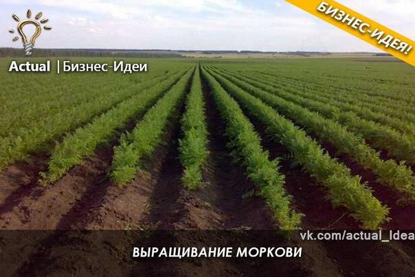 Бизнес идеи на растениеводстве