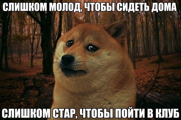 http://cs607328.vk.me/v607328034/3b6b/f1033D0Gb3A.jpg