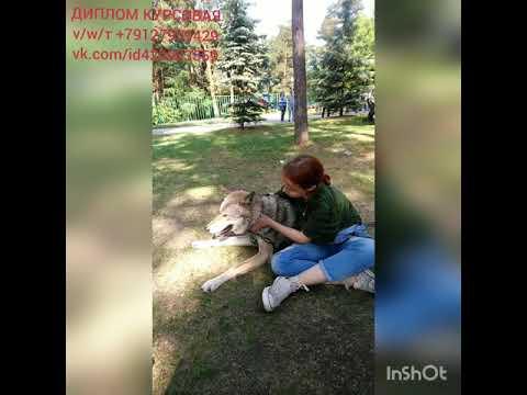 Мелкая и ВолкВоланд балдеют на травке 😊 ДИПЛОМ КУРСОВАЯ тvw 79127939429 vk.comid420983559