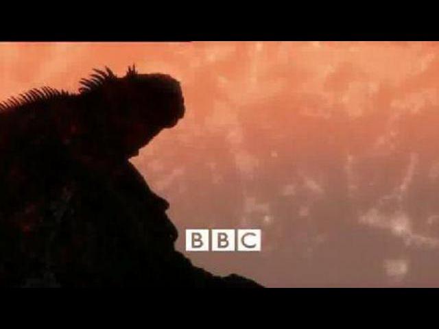 BBC: Жизнь с холодной кровью. 03 Драконы с суши.